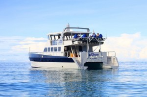 surfcharters